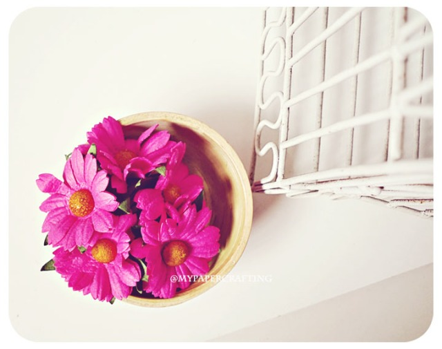 Daisy Bright Pink