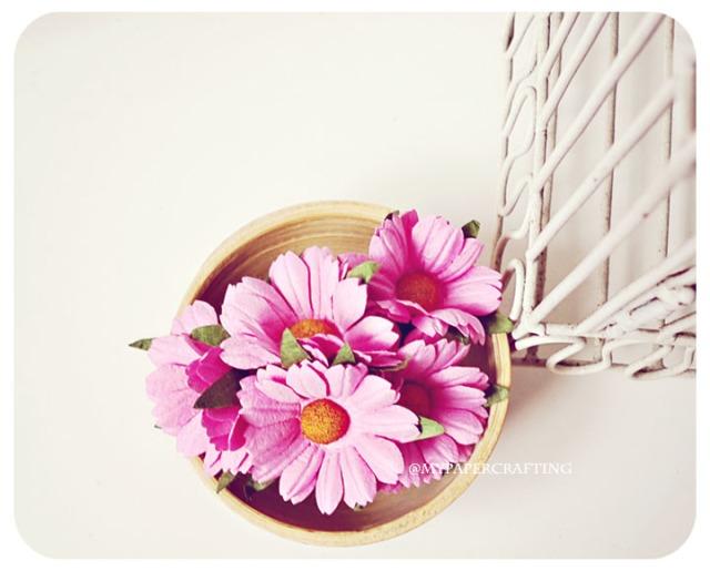 Daisy Sweet Pink